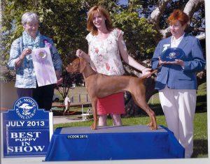 Home - Show Dog Prep School %
