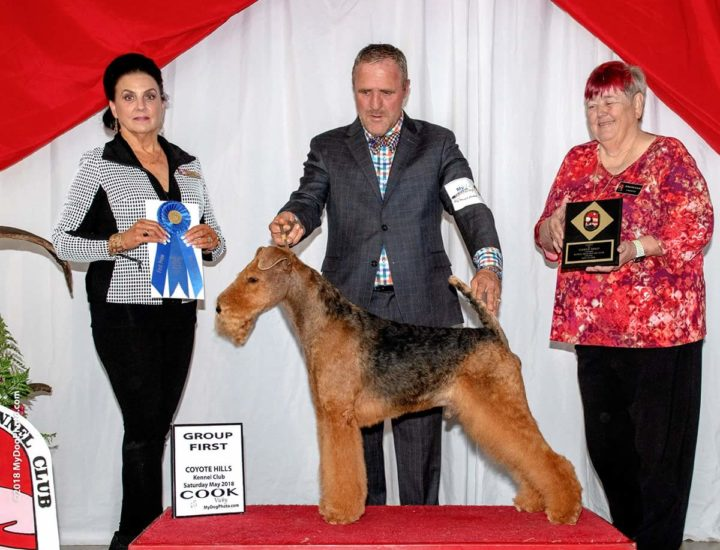 Beckham the Airedale Terrier wins a Group 1!