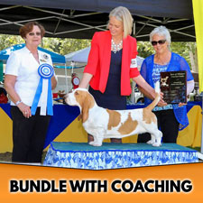 Dog Show Newbie Ultimate Bundle