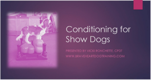 Conditioning for Show Dogs Webinar