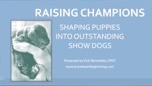 Raising Champions Webinar