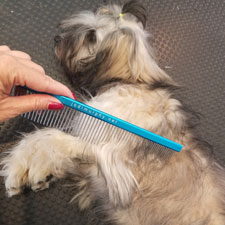 Cooperative Grooming course image